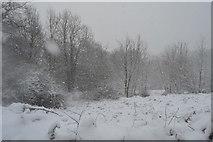 TQ5743 : Blizzard near Bidborough Corner by N Chadwick
