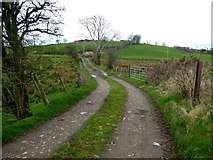 H5371 : Back lane to farm, Bancran by Kenneth  Allen