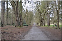 TQ2363 : Nonsuch Park by N Chadwick