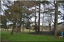 TQ2363 : Trees, Nonsuch Park by N Chadwick