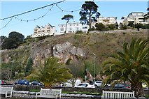 SX9163 : Cliff in Torquay by N Chadwick