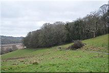 SX8158 : Linhay Plantation by N Chadwick