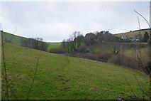 SX8158 : Valley near Sharpham Barton by N Chadwick