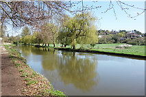 SU9948 : River Wey at Shalford Meadows by Des Blenkinsopp