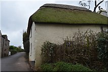 SX8157 : Thatched cottage by N Chadwick