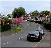 ST3090 : Pink blossom, Rowan Way, Malpas, Newport by Jaggery