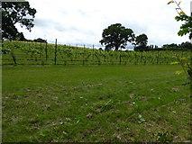 SJ4332 : Vineyard at Colemere by Eirian Evans