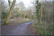TQ2163 : Woodland footpath by N Chadwick