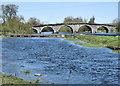 S5549 : Old Bridge : Week 17