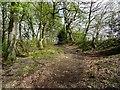 SD6709 : Woodland footpath by Philip Platt