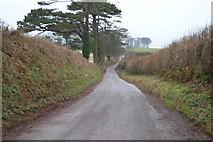 SX8058 : A quiet Devon lane by N Chadwick