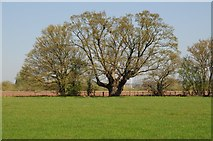 SO8451 : Trees on meadowland beside the River Teme by Philip Halling