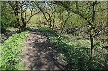 SO8552 : The Severn Way beside Duck Brook by Philip Halling