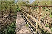 SO8552 : Footbridge beside the River Severn by Philip Halling