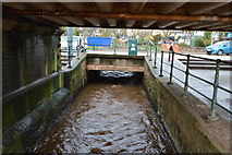 SX9676 : Dawlish Water by N Chadwick