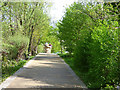 TQ3979 : Walkway, Greenwich Ecology Park by Stephen Craven