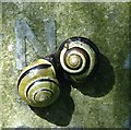 TG2008 : Two snails on a gravestone in Section 53 : Week 18