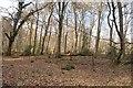 SP8505 : Scrubs Wood in Dunmore by David Howard
