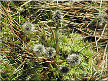 NY8235 : Bog plant near Coldberry End by Mike Quinn
