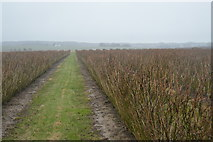 TR2257 : Footpath through orchard by N Chadwick