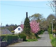 J3532 : Cherry blossom on Middle Tollymore Road by Eric Jones