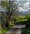 SO0758 : Gated lane by Tygwyn : Week 19