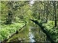 SE2712 : The River Dearne in Bridge Royd Wood by Graham Hogg