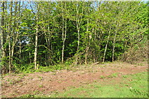 SX9066 : Woodland on Nightingale Park's west boundary by John C