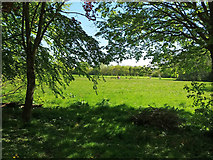 ST0207 : Cullompton: towards the town's playing fields by Martin Bodman