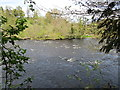 NZ1114 : The River Tees at Wycliffe by Jonathan Thacker