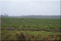 TR2255 : Crops, Bramling Downs by N Chadwick