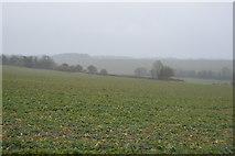 TR2254 : Crops in heavy rain by N Chadwick