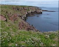 NT9955 : Cliffs north of Berwick-upon-Tweed by Mat Fascione