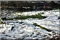 SX8963 : Snowy platform and pond, Cockington valley by Derek Harper