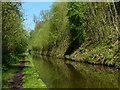 SJ8219 : Cutting along the Shropshire Union Canal by Mat Fascione