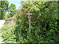 TQ7615 : Footpath Sign and Junction in Battle Great Wood by PAUL FARMER