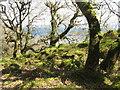 NR6689 : Coastal woodland by M J Richardson