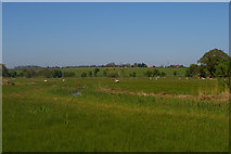 TM4258 : Wet pasture north of the Sailors' Path by Christopher Hilton