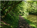 SJ7823 : Tree lined cutting along the Shropshire Union Canal by Mat Fascione