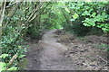 ST1386 : Path in leafy 'tunnel', Penrhos by M J Roscoe