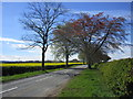 NZ0915 : The road to Sledwich near Whorlton by Jonathan Thacker