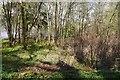 NS3599 : Japanese knotweed infestation, Rowardennan by Richard Webb
