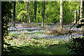 SU7497 : Bluebells in Grove Wood by Bill Boaden