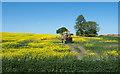 NZ3124 : Crop spraying at Preston-le-Skerne by Trevor Littlewood