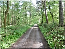 SK0344 : Oakamoor, woodland road by Mike Faherty