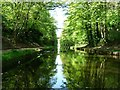 SP0393 : Wooded cutting on the Tame Valley canal by Christine Johnstone