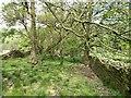 SJ9678 : Footpath down to Black Brook by Antony Dixon