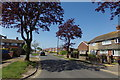 TG5103 : Brasenose Avenue, Gorleston-on-Sea by Adrian Cable