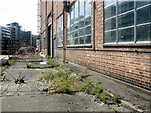 TG2407 : Weeds sprouting beside a disused industrial building by Evelyn Simak