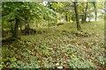 SD4877 : Woodland, Coldwell by Richard Webb